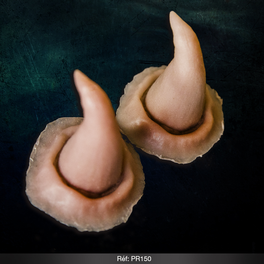 Cornes taille moyenne - Prothèse gélatine ou silicone 150 - Effets spéciaux - Studio41